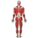 Afbeelding voor categorie Spieren en gewrichten
